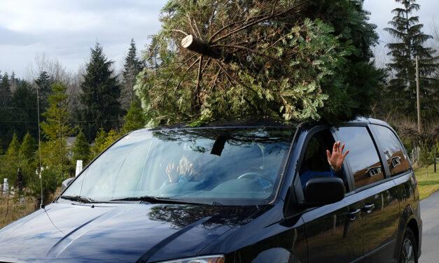'There's a sense of panic': Inside Canada's Christmas tree rush