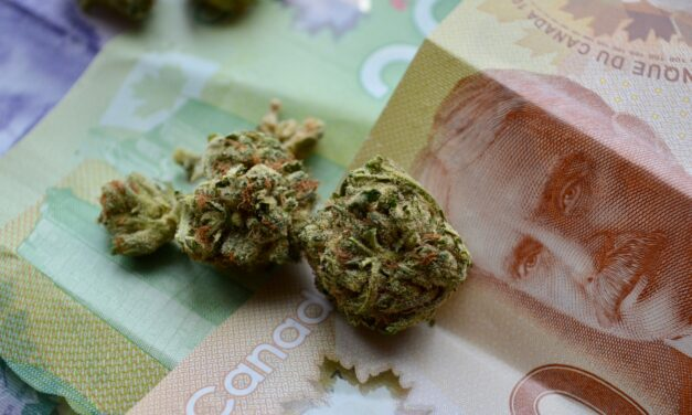 Surviving the pandemic: the Canadian cannabis industry